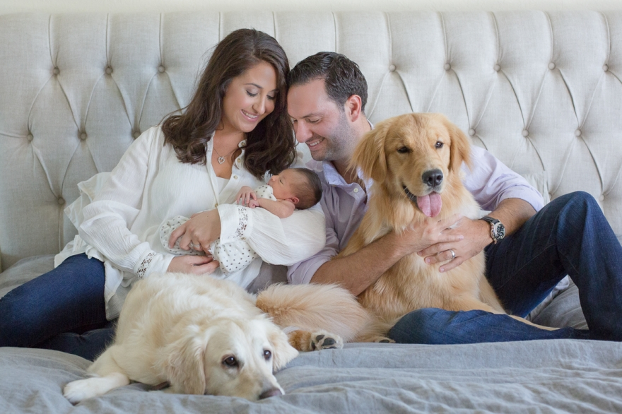 newborn baby girl home lifestyle session natural light mom dad and dogs golden retrievers